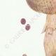 DÉTAILS 02 | Mycologie - Champignon - Psalliota - Stropharia Pl.137