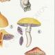 DETAILS 05 | Mycology - Mushroom - Stropharia Pl.138