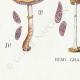 DETAILS 07 | Mycology - Mushroom - Stropharia Pl.138
