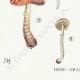 DÉTAILS 03 | Mycologie - Champignon - Stropharia Pl.139