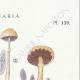 DÉTAILS 04 | Mycologie - Champignon - Stropharia Pl.139