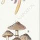 DÉTAILS 05 | Mycologie - Champignon - Stropharia Pl.139