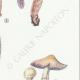 DETAILS 05 | Mycology - Mushroom - Stropharia Pl.140
