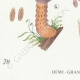 DETAILS 03 | Mycology - Mushroom - Hypholoma Pl.141