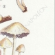 DETAILS 05 | Mycology - Mushroom - Hypholoma Pl.141