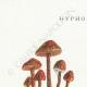 DÉTAILS 01   Mycologie - Champignon - Hypholoma Pl.142