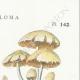 DÉTAILS 04   Mycologie - Champignon - Hypholoma Pl.142