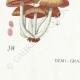 DÉTAILS 07   Mycologie - Champignon - Hypholoma Pl.142