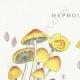 DETAILS 01   Mycology - Mushroom - Hypholoma Pl.143