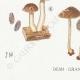 DETAILS 03   Mycology - Mushroom - Hypholoma Pl.143
