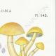 DETAILS 04   Mycology - Mushroom - Hypholoma Pl.143