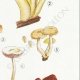 DETAILS 05   Mycology - Mushroom - Hypholoma Pl.143