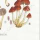 DETAILS 06   Mycology - Mushroom - Hypholoma Pl.143