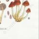 DETAILS 08   Mycology - Mushroom - Hypholoma Pl.143