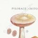 DÉTAILS 01 | Mycologie - Champignon - Pilosace - Chitonia - Psilocybe Pl.144