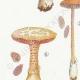 DÉTAILS 02 | Mycologie - Champignon - Pilosace - Chitonia - Psilocybe Pl.144