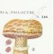 DÉTAILS 04 | Mycologie - Champignon - Pilosace - Chitonia - Psilocybe Pl.144