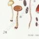 DETAILS 03 | Mycology - Mushroom - Psilocybe Pl.145