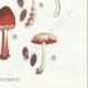 DETAILS 06 | Mycology - Mushroom - Psilocybe Pl.145
