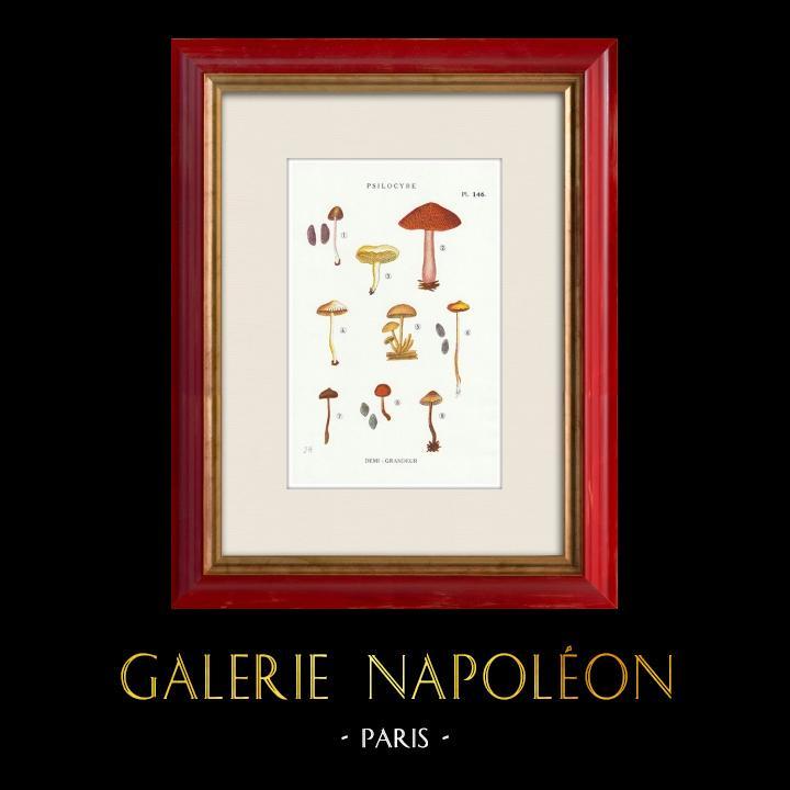 Gravures Anciennes & Dessins | Mycologie - Champignon - Psilocybe Pl.146 | Impression | 1919