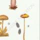 DÉTAILS 05 | Mycologie - Champignon - Psilocybe Pl.146
