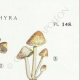 DETAILS 04 | Mycology - Mushroom - Psathyra Pl.148