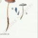 DETAILS 06 | Mycology - Mushroom - Psathyra Pl.148