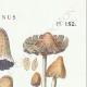 DETALLES 04 | Micología - Seta - Coprinus Pl.152