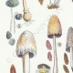 DETAILS 02   Mycology - Mushroom - Coprinus Pl.153