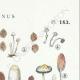DETAILS 04   Mycology - Mushroom - Coprinus Pl.153
