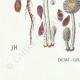 DETAILS 07   Mycology - Mushroom - Coprinus Pl.153
