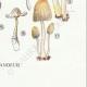 DETAILS 08   Mycology - Mushroom - Coprinus Pl.153