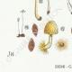 DETAILS 03 | Mycology - Mushroom - Coprinus Pl.154
