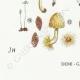 DETAILS 07 | Mycology - Mushroom - Coprinus Pl.154
