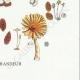 DETAILS 08 | Mycology - Mushroom - Coprinus Pl.154