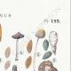 DETALLES 04 | Micología - Seta - Coprinus Pl.155