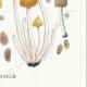 DETALLES 06 | Micología - Seta - Coprinus Pl.155