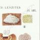 DÉTAILS 04 | Mycologie - Champignon - Montagnites - Lenzites Pl.157