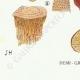 DÉTAILS 07 | Mycologie - Champignon - Montagnites - Lenzites Pl.157