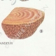 DETAILS 08 | Mycology - Mushroom - Lenzites - Daedalea Pl.158