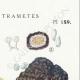 DÉTAILS 04 | Mycologie - Champignon - Daedalea - Trametes Pl.159