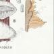 DÉTAILS 06 | Mycologie - Champignon - Daedalea - Trametes Pl.159