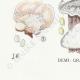 DÉTAILS 07 | Mycologie - Champignon - Daedalea - Trametes Pl.159
