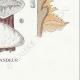 DÉTAILS 08 | Mycologie - Champignon - Daedalea - Trametes Pl.159