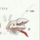 DETALLES 04 | Micología - Seta - Trametes Pl.160