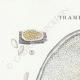 DÉTAILS 01 | Mycologie - Champignon - Trametes Pl.161