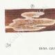 DÉTAILS 03 | Mycologie - Champignon - Trametes Pl.161
