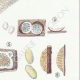 DÉTAILS 05 | Mycologie - Champignon - Trametes Pl.161