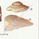 DÉTAILS 06 | Mycologie - Champignon - Trametes Pl.161