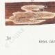 DÉTAILS 07 | Mycologie - Champignon - Trametes Pl.161